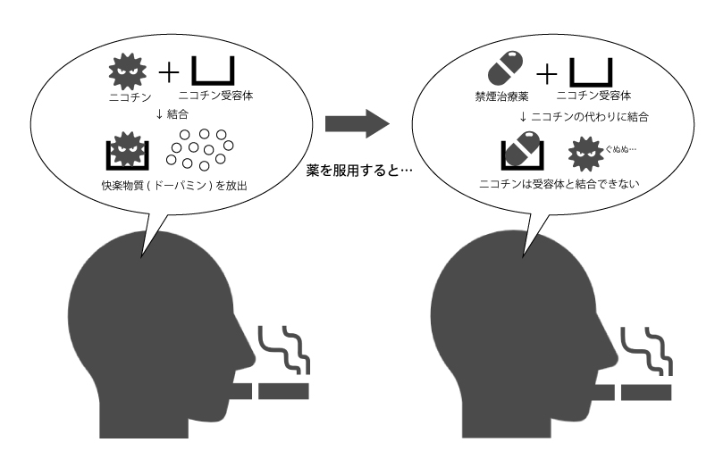 薬の効果イメージ(禁煙外来レポート)